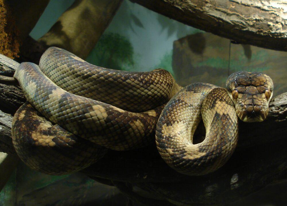 serpientes más grandes del mundo