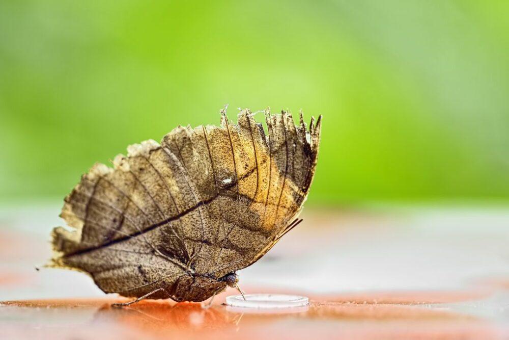 mariposa hojas