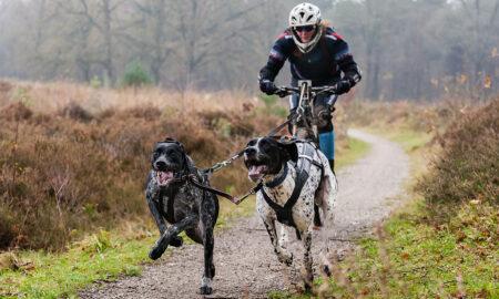 Bikejoring ¿Qué es y por qué puede mejorar tu relación con tu perro?