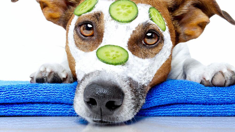 Tratamientos estéticos, un complemento prescindible para perros