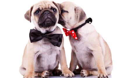 complementos estéticos para perros