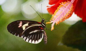mariposas- tipos y especies