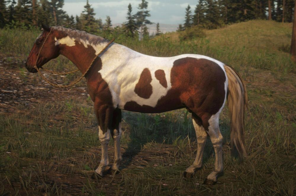 mejores razas de caballos según su especialidad