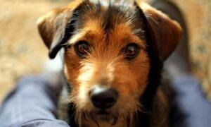 Tener perro viviendo solo: todo lo que deberías tener en cuenta