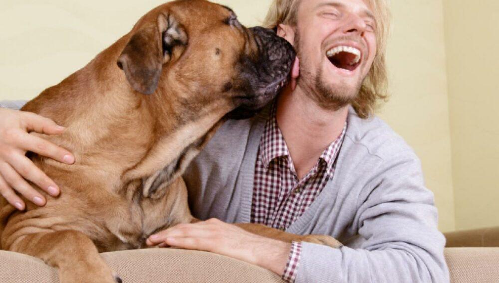Mejores razas de perros para tener en casa viviendo solo